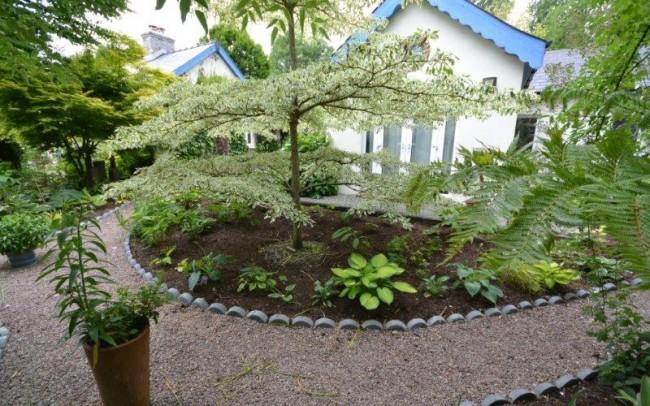 Nicks garden 1